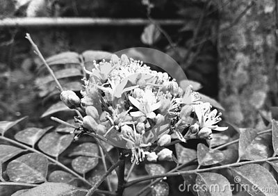 Flower nature spring agriculture plants plant flowers blackandwhite