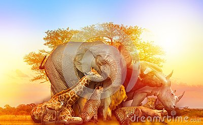 African animals collage sunset