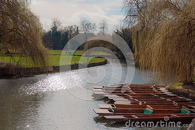 Moored Punts on the River Cam