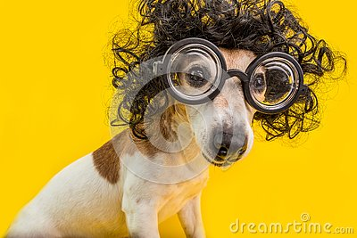 Curious nerd smart dog face in round professor glasses and curly black afro style hairstyle. Education. Yellow