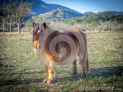 A poney on the field