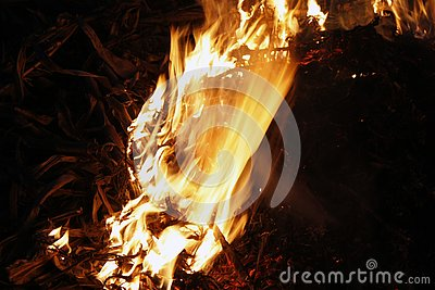 Fire, flames on a black background, fire texture