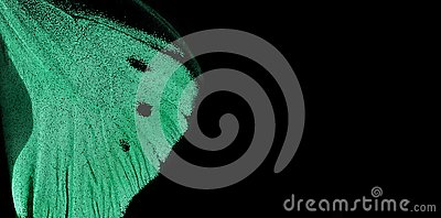Trendy mint color. Wing of tropical butterfly on black background. copy spaces.