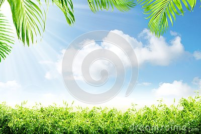 Green grass and palm branches with sunlight