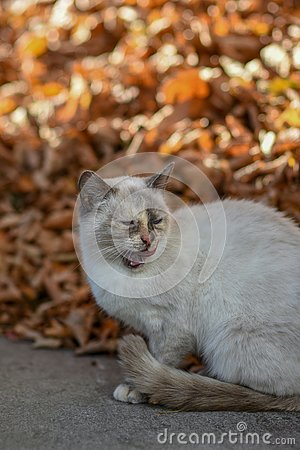 stock image of on earth cat has food and is looking forward to