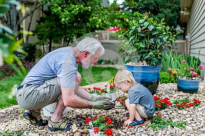 Grandfather and Grandson Spend Time Together Planting Flowers in the Garden