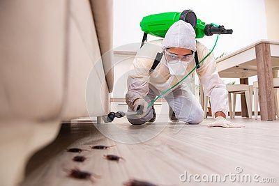 The pest control contractor working in the flat