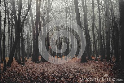 Deep into the fogy forest