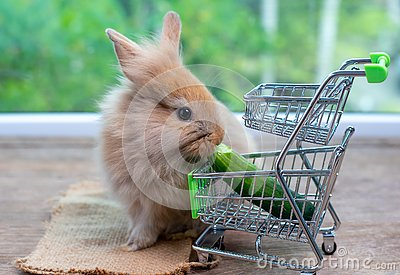 stock image of cute light brown rabbit eat cucumber in shopping cart on wood table with green background