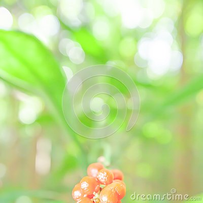 Soft focus of young green leaves with red fruitage in a tropical forest, bright and beautiful bokeh with blurred green backgrounds