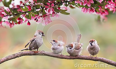 Natural background with birds sparrow with little chicks sitting on a wooden fence in the village garden surrounded by yab flowers