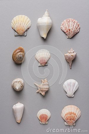 Geometric pattern from rows of sea shells of different shapes and colors on gray stone background. Elegant minimalist style