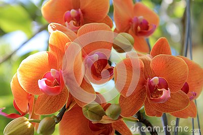 Colorful orchids hanging from a tree