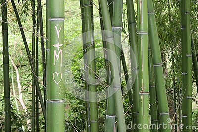 stock image of bamboo stick from french park in montauban