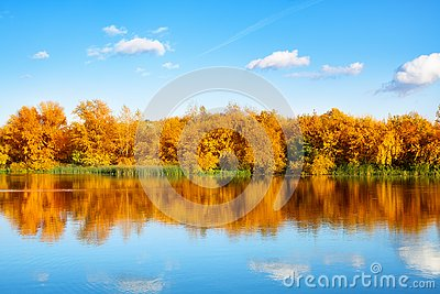 Autumn landscape, yellow leaves trees on river bank on blue sky and white clouds background on sunny day, reflection in water