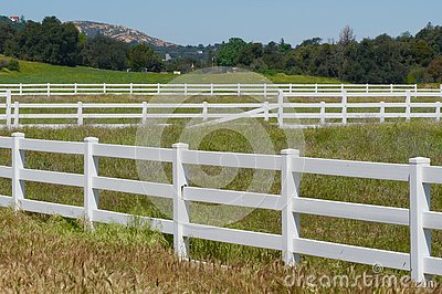 Rows of White Fences and Pasture