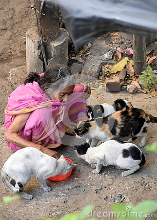 stock image of old woman feeding cats