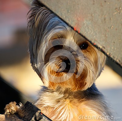 stock image of cute puppy peaking through the fence