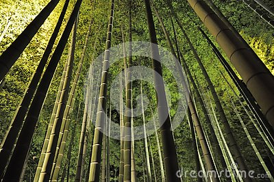 stock image of green bamboo in the dark