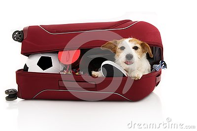 JACK RUSSELL DOG INSIDE A RED MODERN SUITCASE GOING ON VACATIONS. ISOLATED AGAINST WHITE BACKGROUND