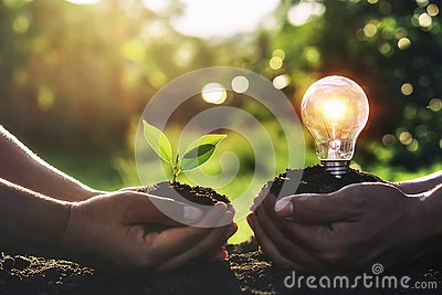 hand holding young plant with light bulb on dirt and sunset background