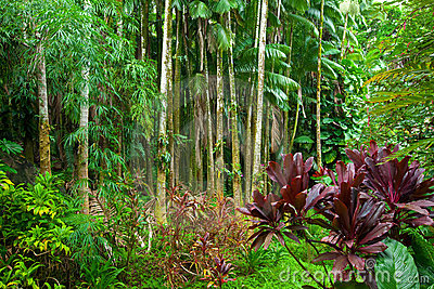 Lush tropical rain forest