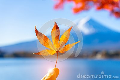 Maple leave in Finger with Mt.Fuji background