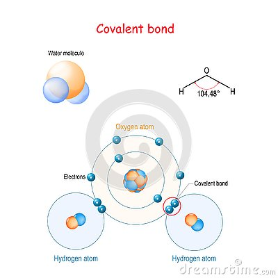 Covalent bond for example water molecule H2O