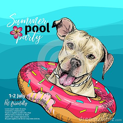 Vector portrait of pit bull terrier dog swimming in water. Donut float. Summer pool paty illustration. Sea, ocean, beach
