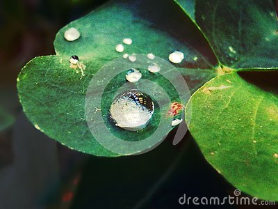 Drops of water over a leaf