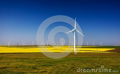 Wind turbines. Fields with windmills. Rapeseed field in bloom. Renewable energy. Protect the environment. Dobrogea, Romania