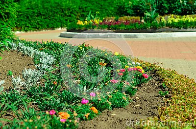Garden bed with different colors flowers in summer