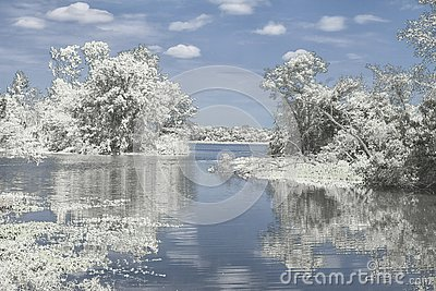 Winter Reflection on the Lake