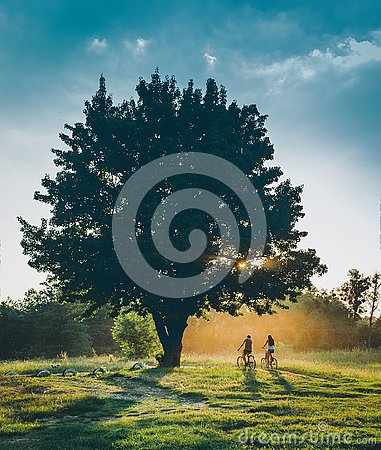 People ride a bike at sunset with a sun set under a tree. Nature