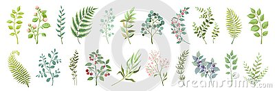 Botanic elements. Trendy wild flowers and branches, plants and leaves green collection. Vector vintage greenery floral
