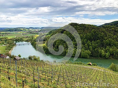 Photogenic vineyards and lowland forests in the Rhine valley, Buchberg