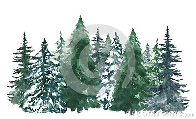 Watercolor pine trees background. Banner with hand painted evergreen forest, isolated. Snow winter wonderland illustration