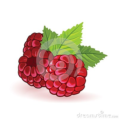 Red raspberry with green leaves. Summer fruitage. Three sweet ripe berries.