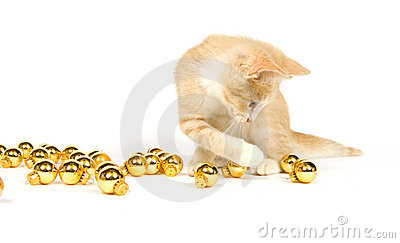 Yellow kitten playing with Christmas Decorations