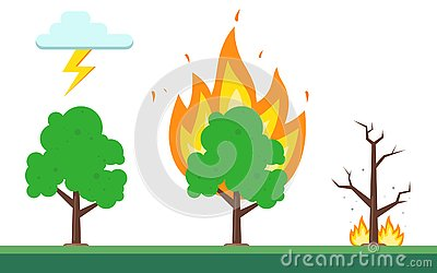 Sequence of fire in the forest. the natural nature