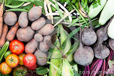 Fresh nutrient organic vegetables background. Sustainable farming agriculture  market
