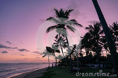 Palm trees silhouettes on tropical beach during colorful sunset.