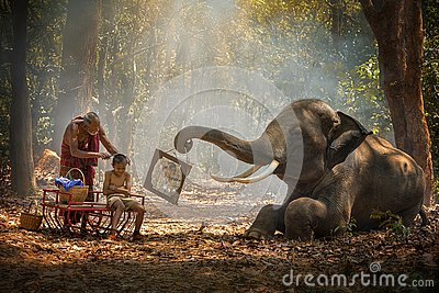 Elephant mahout portrait. Grandfather was cutting his nephew with an elephant holding a mirror. vintage style. The activities at