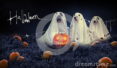 Halloween background with dogs and pumpkin field