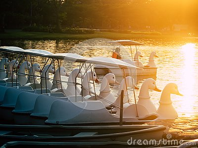 Duck pedal boat is lined up in the sunset. water bicycles locked on the lake in a sunny autumn day .