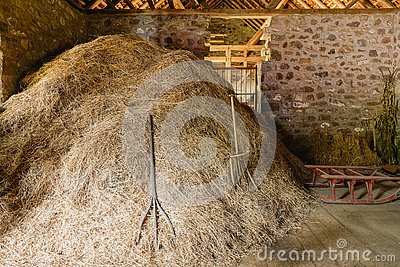 Pile of hay with old fashioned pitchforks