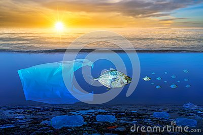 Fish that are approaching dying, floating on the surface, the impact of plastic waste in the sea concepts of nature conservation