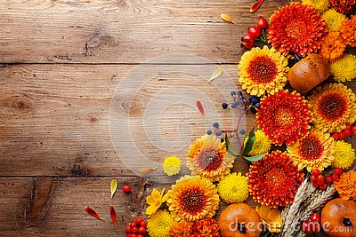 Autumn background with orange and yellow gerbera flowers, red berries, decorative pumpkins, wheat ears. Thanksgiving day