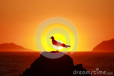 Seagull silhouette on sunset, Adriatic sea in Croatia, taken from Island Lokrum near Dubrovnik