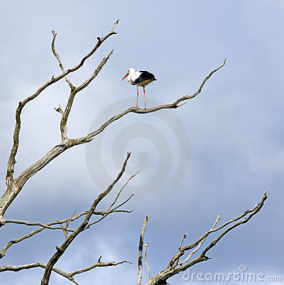 Dead tree and stork